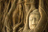 Buddha Head in the roots of the tree, Ayutthaya, Thailand. — Stok fotoğraf