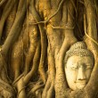 Stock Photo: Buddha Head in the roots of the tree, Ayutthaya, Thailand.