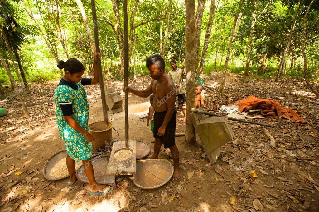 Unidentified People Orang Asli Thresh Rice To Remove Chaff