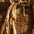 Angkor Wat — Stock Photo #30969521