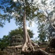 Angkor Wat — Stock Photo #31119827