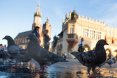 View of the Main Square in Krakow — Stock Photo