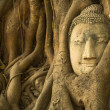 The Head of Buddha — Stock Photo