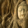 The Head of Buddha — Foto Stock #31489171