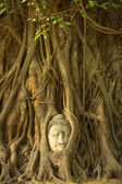 The Head of Buddha — Stockfoto