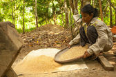Unidentified women Orang Asli thresh rice to remove chaff — ストック写真