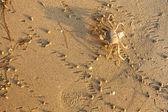 Caranguejo do mar da costa. — Fotografia Stock