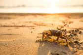 Crab on the coast sea — Foto Stock
