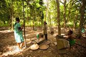 People Orang Asli thresh rice — Stock Photo