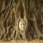 The Head of Buddha — Stock Photo