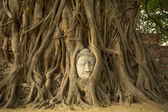 The Head of Buddha — Foto Stock