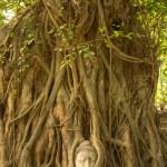 Buddha head — Stock Photo