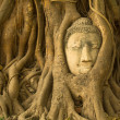 Buddha head — Foto Stock #37902647