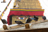 Pigeons on Boudhanath stupa — Stok fotoğraf