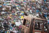 птицы в ожидании еды и кучу бытового мусора — Стоковое фото