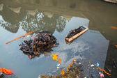 Bagmati River (Cremation ceremony) in Kathmandu — Stok fotoğraf