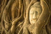 The Head of Buddha in Wat Mahathat — Stok fotoğraf