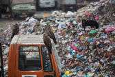 Pile of domestic garbage at landfills — Foto de Stock