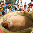 Cockfighting in cock-shop at Chatuchak Weekend Market — Stock Photo #39025625