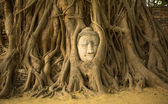 Head of Buddha in Ayutthaya, Thailand. — Stock Photo