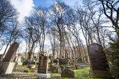 Novo cemitério judeu em cracóvia — Foto Stock