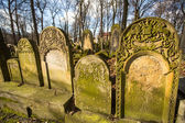 New Jewish Cemetery in Krakow — Stock Photo