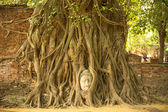 Buddha in roots of the tree — Stock Photo