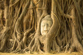 The Head of Buddha in Ayutthaya — Stock Photo