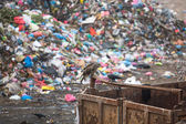 Pile of domestic garbage at landfills — Foto Stock