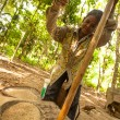 Постер, плакат: Unidentified women Orang Asli thresh rice to remove chaff