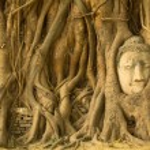 Head of Buddha — Stock Photo #46984077