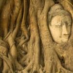 Head of Buddha in Ayutthaya — Stock Photo #47241717