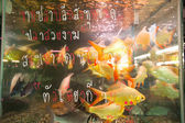 Aquarium fish in fishmarket at Chatuchak Weekend Market — Stock Photo