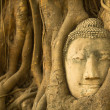 Head of Buddha in the roots of the tree — Stock Photo #47274719