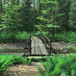 Bridge over a Woodland Stream — Stock Photo