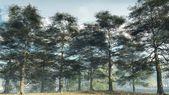 Misty Morning Ash Woodland — Stock Photo