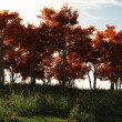 Autumn Trees in Sunshine — Foto de Stock