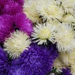 A bunch of various bright blossoming asters. Flowers background.  — Stock Photo