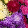A bunch of various blossoming asters. Flowers background.  — Stock Photo