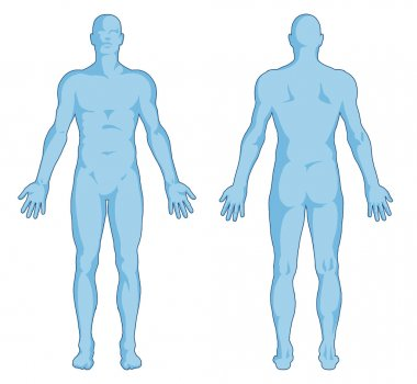 Male body shapes - human body outline - posterior and anterior view - full body