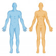 Female male body shapes – human body outline – vector - anterior view - full body — Stock Photo #14626121
