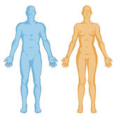Female male body shapes – human body outline – vector - anterior view - full body — Foto Stock