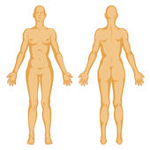 Female body shapes – human body outline – vector - posterior and anterior view - full body — Stock Photo