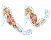 Movement of the arm and hand muscles — Stock Photo