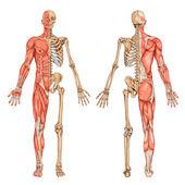 De schelet fatza falę 4 — Zdjęcie stockowe