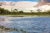 Pantanal wetlands in Brazil — Stock Photo