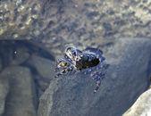 Crab near the shore — Стоковое фото