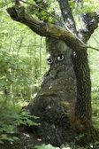 Sad old tree — Stock Photo