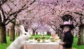 Tea party — Stock Photo