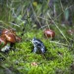 Mushroom — Stock Photo #13259501